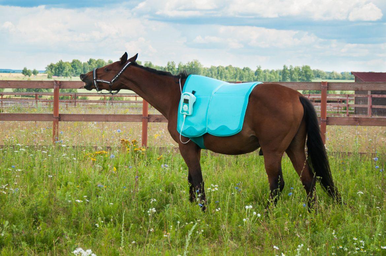 Biomag Lumina Vet, магнитотерапия, ветеринария, лечение лошадей, магнитотерапия для лошадей