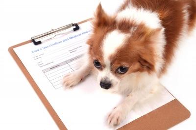 Применение электротерапии в ветеринарии
