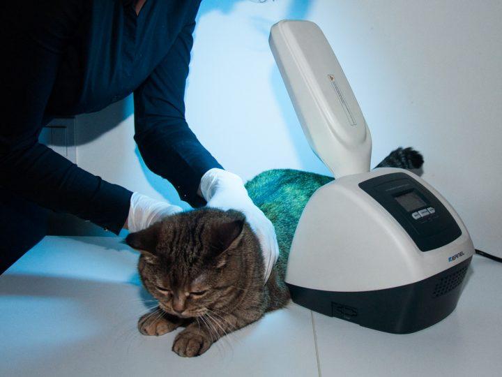 Аппарат для УФ терапии животных KN-4006
