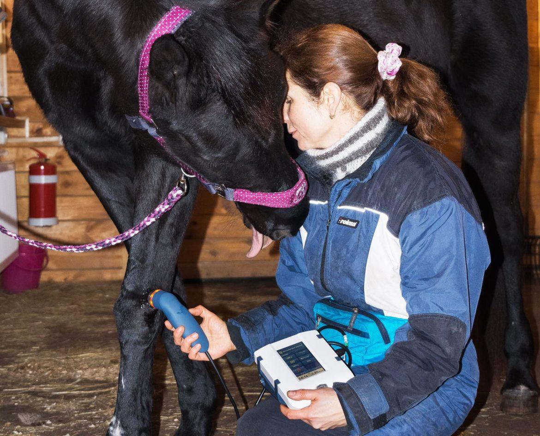 Сонопульс 190 для лошадей, Сонопульс 190 для ветеринарии, Sonopuls 190 for horses