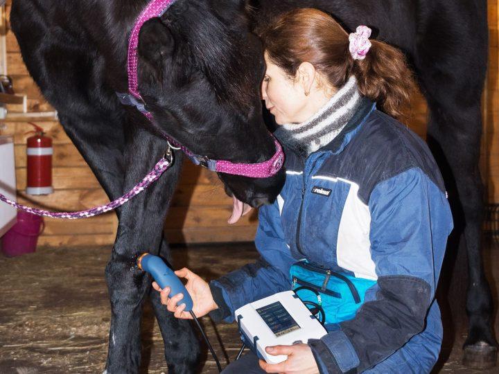 Ультразвуковая терапия для лошадей