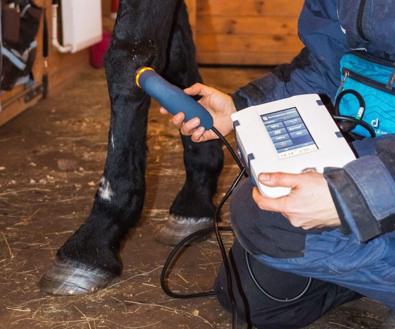 Сонопульс 190 для ветеринарии, Sonopuls 190, Сонопульс 190 для лошадей, ультразвуковая терапия для ветеринарии
