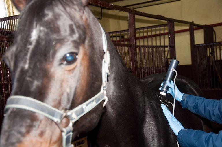 shockwave, veterinary, horses, ударно-волновая терапия лошадей, лечение лошадей, ветеринария, спортивные лошади, УВТ