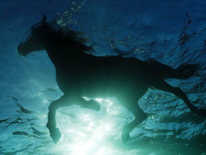 Гидротерапия для лошадей
